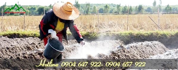 Cách bón vôi cho cây trồng
